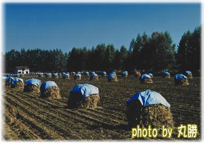 小豆畑「ニオ積み」